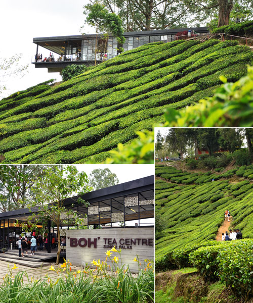 BOH Tea Centre