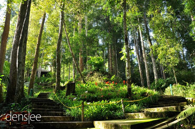 Botanical Garden at Japanese Village.